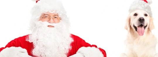Беговой Дед Мороз-2016!